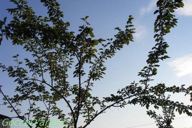 L'albero misterioso